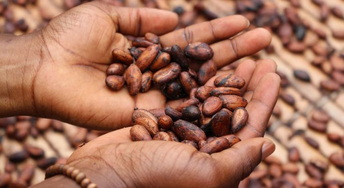 How to Start An Agribusiness in Kenya